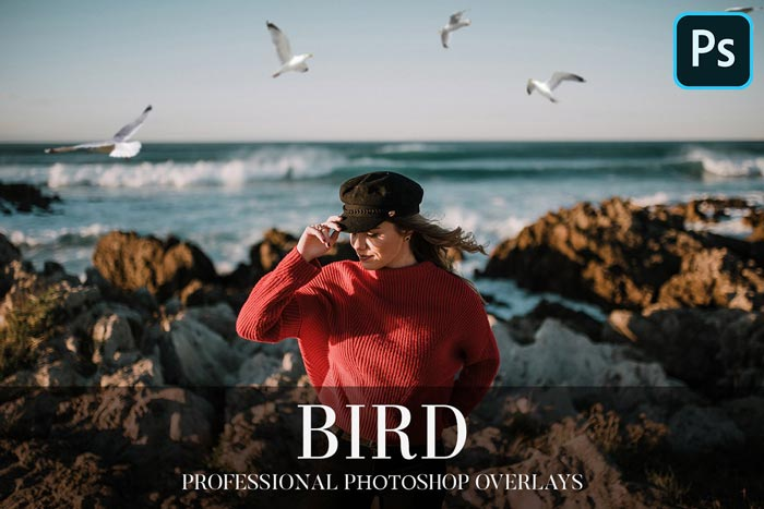 Bird Overlays Photoshop 4 - دانلود مجموعه 25 تصویر PNG و OVERLAY فتوشاپ با موضوع پرندگان